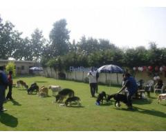 DOG BOARDING & TRAINING CENTER IN NOIDA