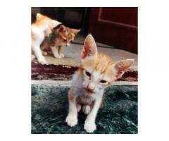 Cats 4 sale