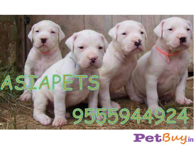Dogo India Pets Pet Accessories India Home Lifestyle Olx In