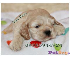 Puppies For Sale In India