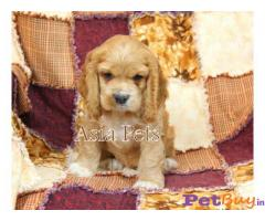 Dog For Sale In Hyderabad